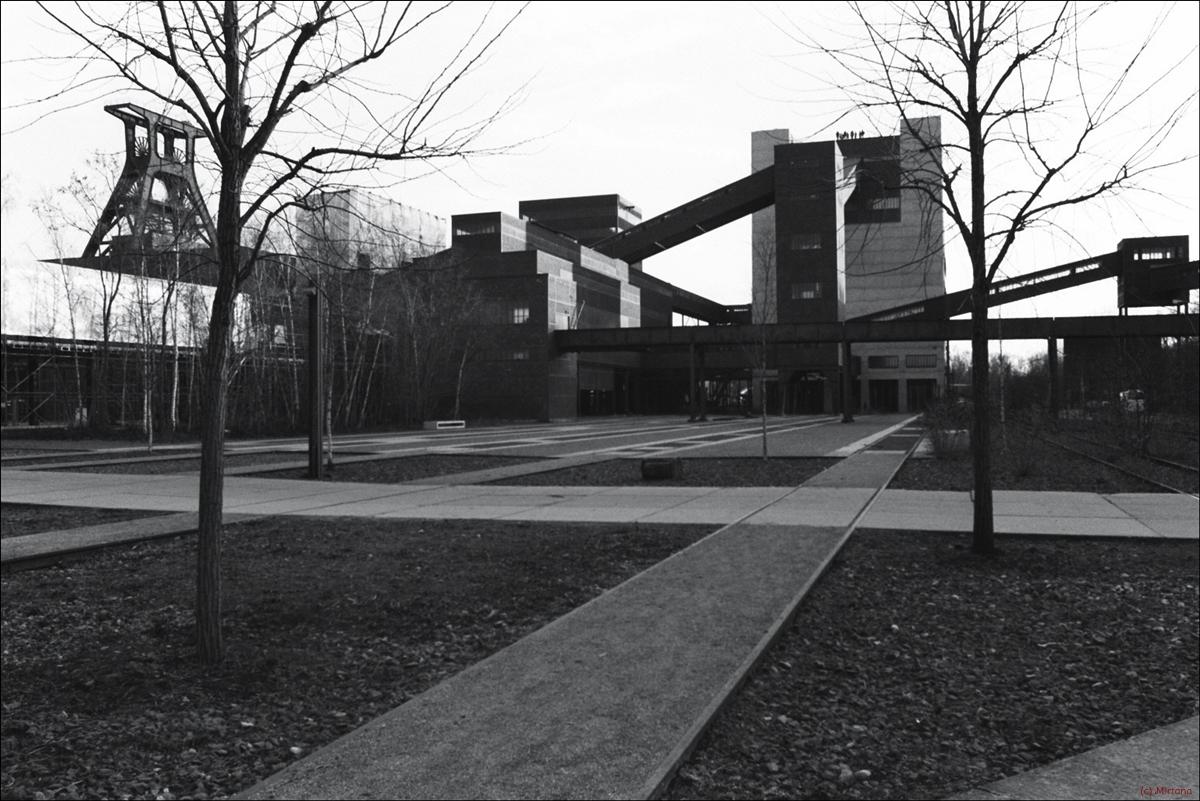 Schwarzweiß-Filme analog Fotografie