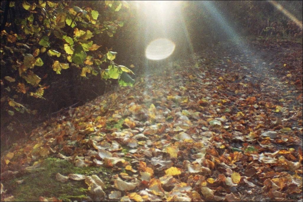 Fünf Fakten Herbst 04
