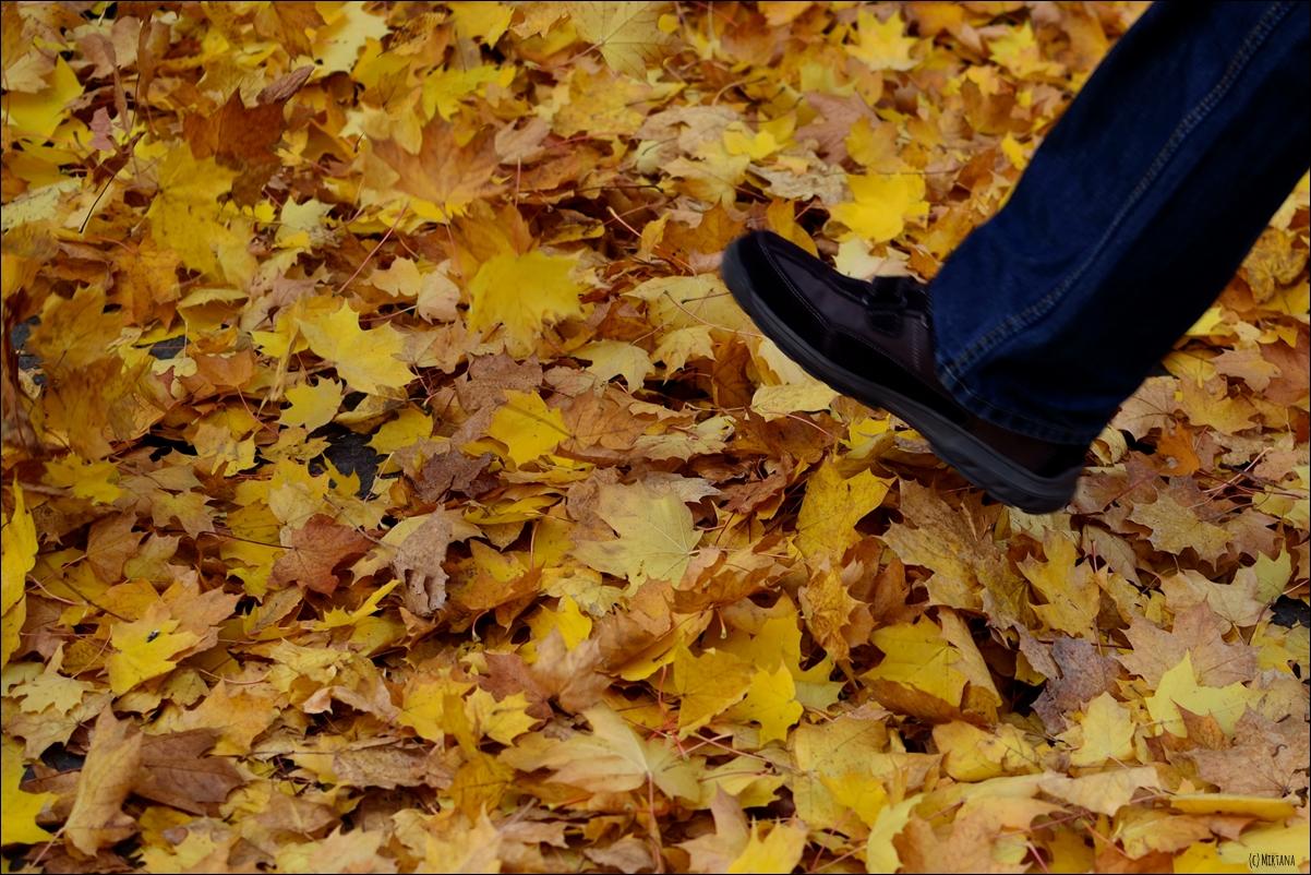 Fünf Fakten Herbst 05