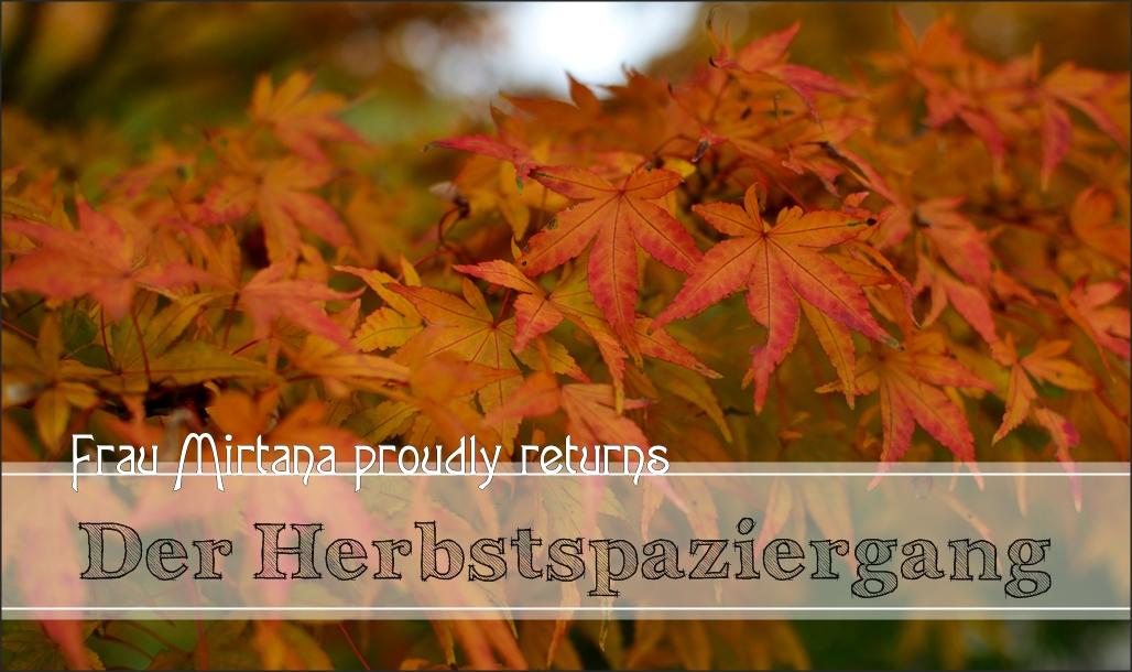 Der Herbstspaziergang – Wittringer Wald