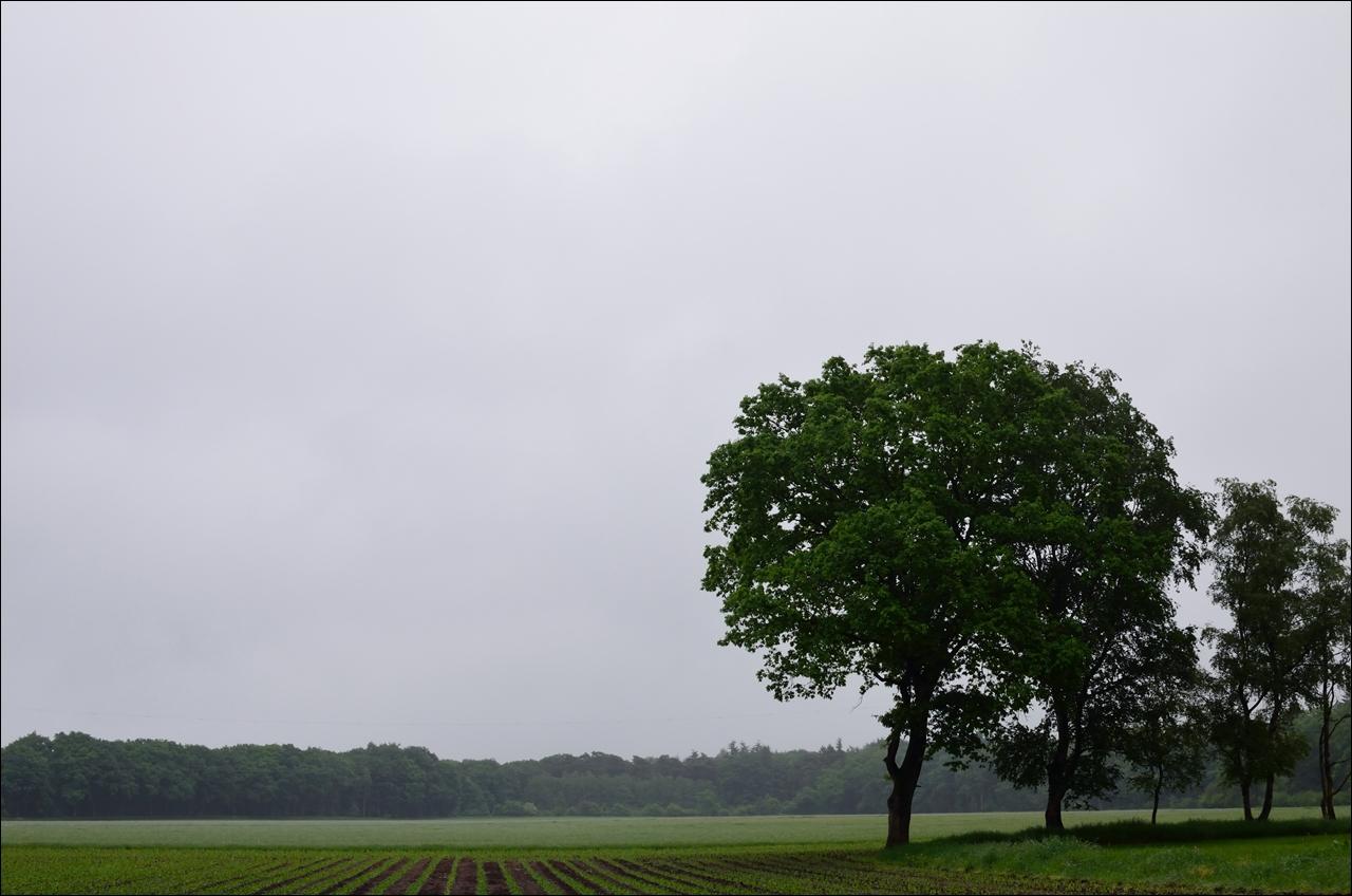Raindrops keep falling 10