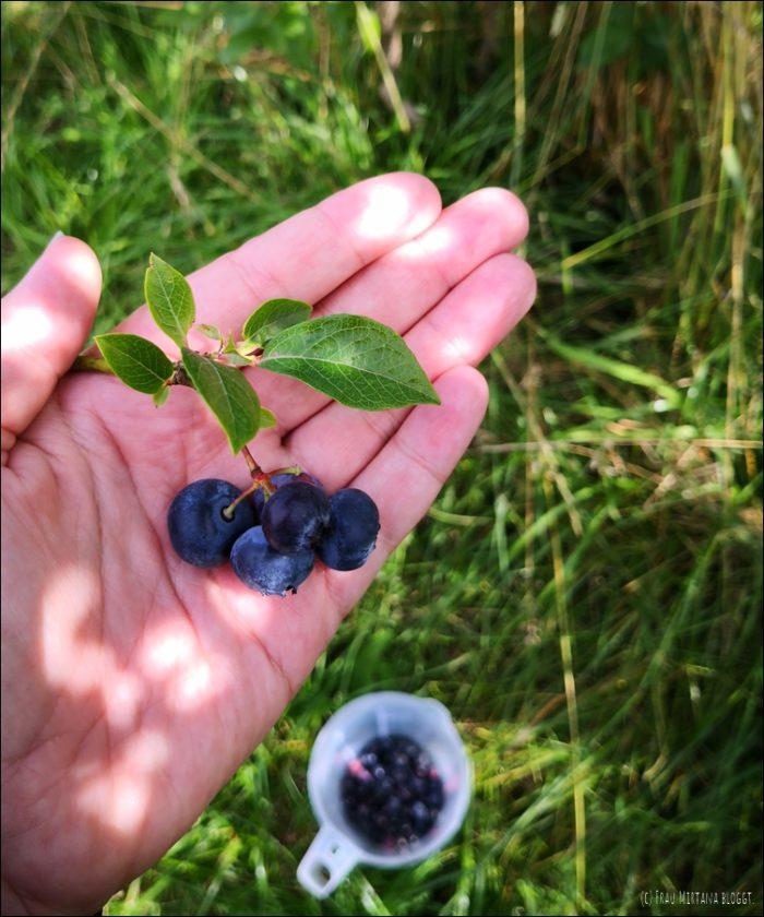 Monatsliebe August frische Heidelbeeren