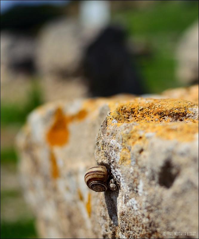 Schnecke in Tharros Sardinien
