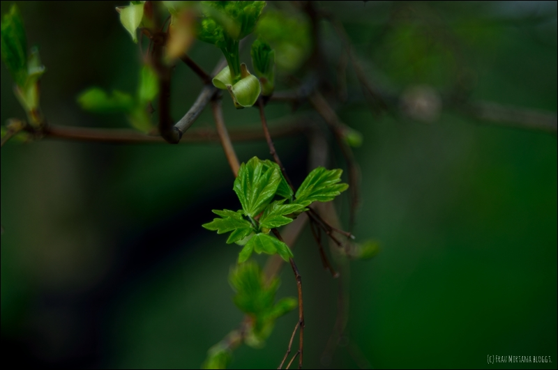 Nahaufnahme frisches Blattgrün