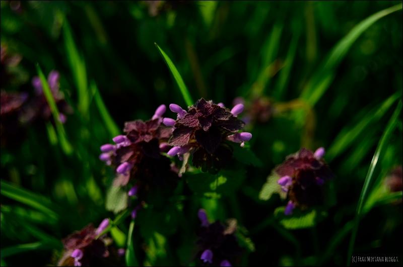 Kleeblüte aufgenommen mit Helios 44