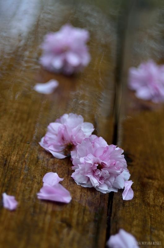 Kirschblüten aufgenommen mit Helios 44