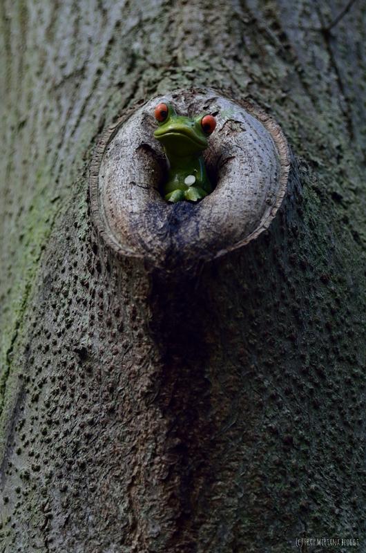 Frosch in Baum